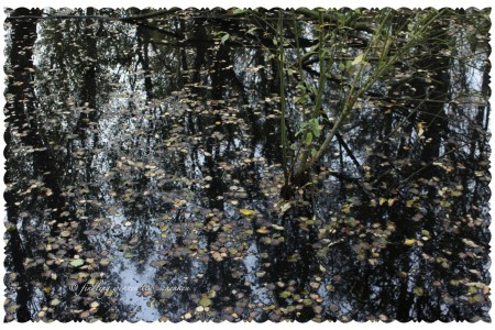 IMG 0609 450x300 geliebter Herbst