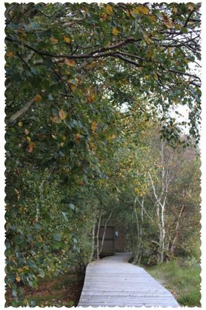 IMG 0613 300x450 geliebter Herbst